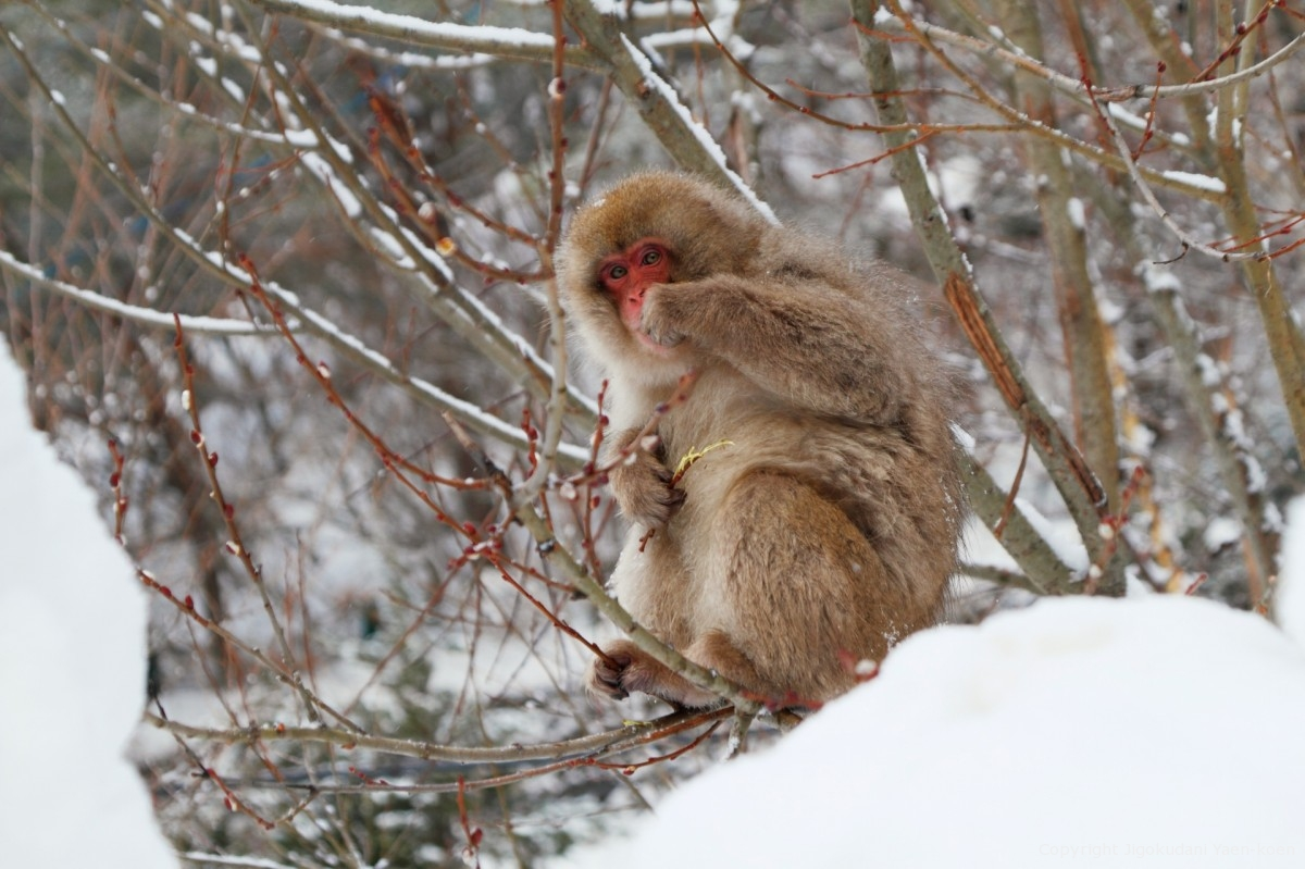 Monkey Observation