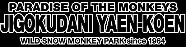 JIGOKUDANI YAEN-KOEN|Welcome , Japanese Monkey to the world