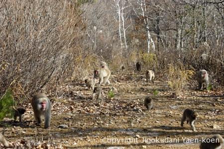 The society of monkeys