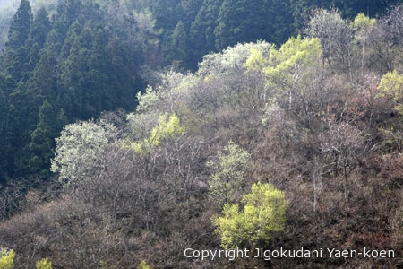Four seasons in Jigokudani