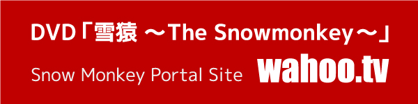 DVD「雪猿 ~The Snowmonkey~」 スノーモンキーポータルサイト wahoo.tv (Japanese page)