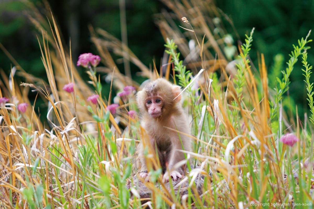 Four seasons for a monkey