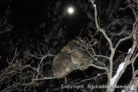 木の上で寝る