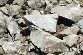 石英閃緑岩