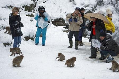 サルを観る人たち
