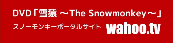 DVD「雪猿 ~The Snowmonkey~」 スノーモンキーポータルサイト wahoo.tv
