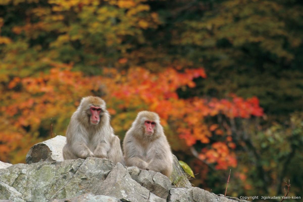 重要:秋にお越しの際の注意とお願い